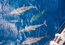 Span3_hualien_port_whale_watching________-016