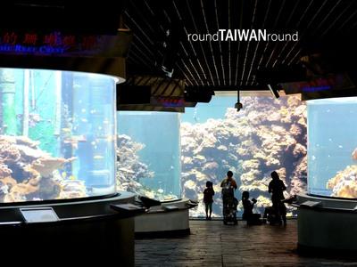 Resize 400x300 national museum of marine biology   aquarium         018