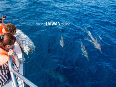 Resize 400x300 dolphin watching hualien port          004