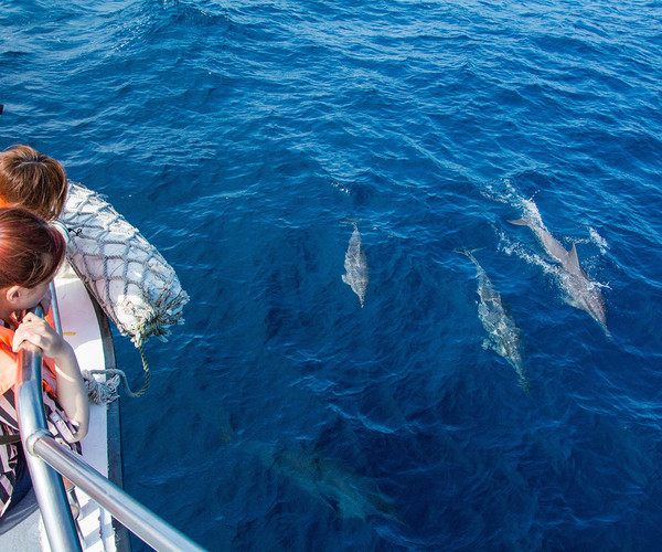 Hualien - Dolphin Watching