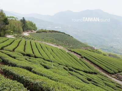 Resize 400x300 alishan tea plantations         024
